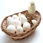 Yumurta Sektörü